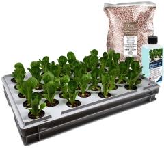 Aqua 36-B Pro Hydroponic Anzucht-System XL 40 x 60 cm, für Nutzpflanzen, Gemüse, Kräuter, Salate, Zierpflanzen in Tiefwasserkultur (DWC)