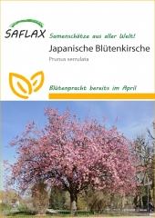 Japan. Blüten-/Zierkirsche (30 Korn)