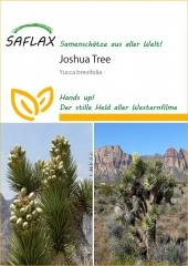 Joshua Tree - Yucca brevifolia (10 Korn)