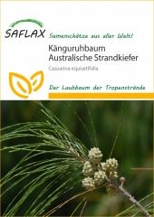 Känguruhbaum Australische Kiefer 200Korn