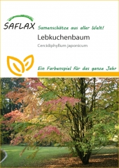 Lebkuchenbaum (200 Korn)
