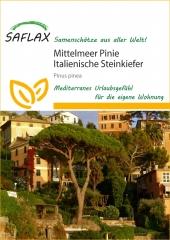 Mittelmeer - Pinie (6 Korn)