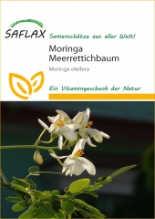 Moringa - Moringa oleifera (10 Korn)