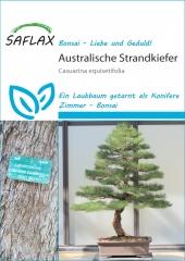 Australische Kiefer (200 Korn)