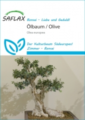 Ölbaum - Olea europea (20 Korn)