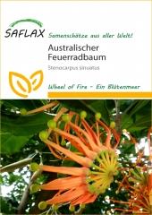 Australischer Feuerradbaum (20 Korn)