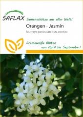 Orangen-Jasmin (12 Korn)
