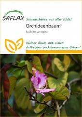 Orchideen-Baum (8 Korn)