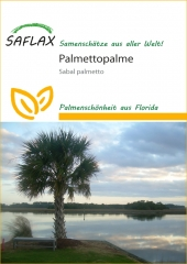 Palmettopalme - Sabal palmetto (8 Korn)