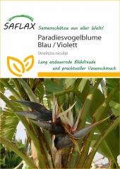 Paradiesvogelblume (5 Korn)