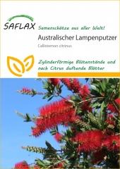 Australischer Lampenputzer (400 Korn)