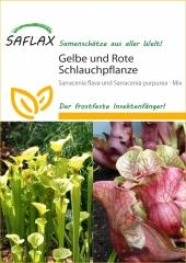 Schlauch- / Kannenpflanze (10 Korn)