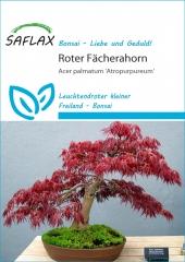 Roter Fächerahorn (20 Korn)