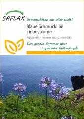 Schmucklilie Liebeslume (50 Korn)
