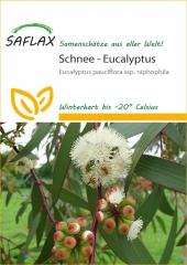 Schnee-Eucalyptus (250 Korn)