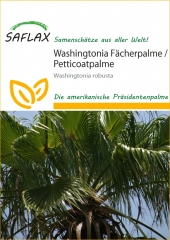 Washingtonia - Fächerpalme (12 Korn)