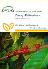 Zwergkaffee-Strauch (8 Korn)