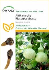 Afrikanische Riesenkalebasse (15 Korn)